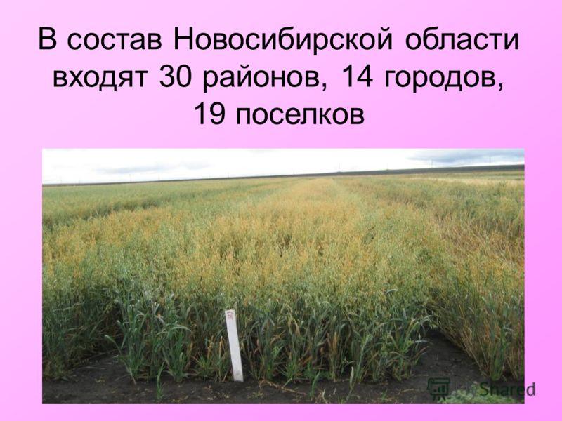 В состав Новосибирской области входят 30 районов, 14 городов, 19 поселков