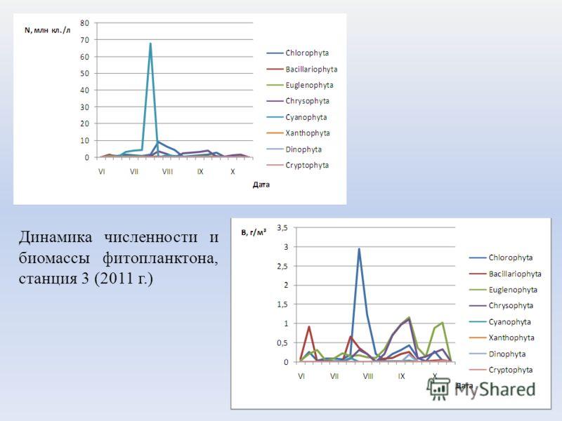 Динамика численности и биомассы фитопланктона, станция 3 (2011 г.)