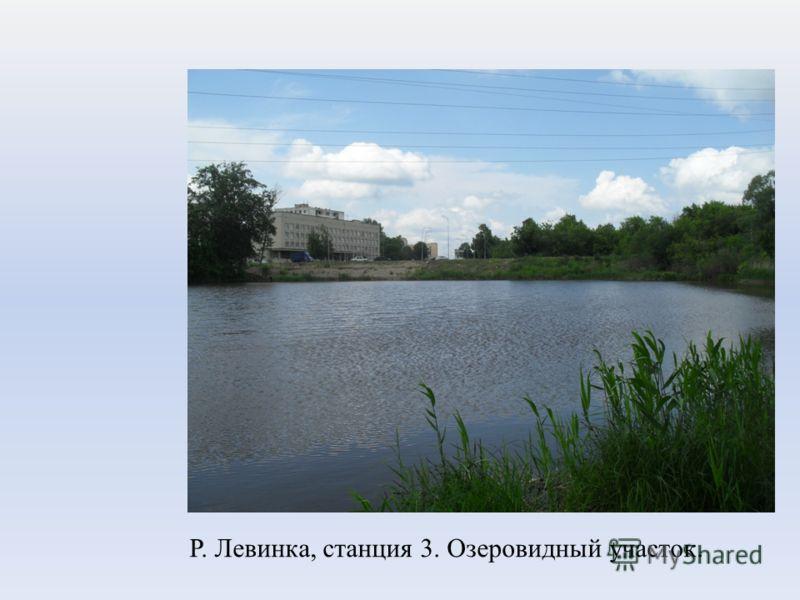 Р. Левинка, станция 3. Озеровидный участок.