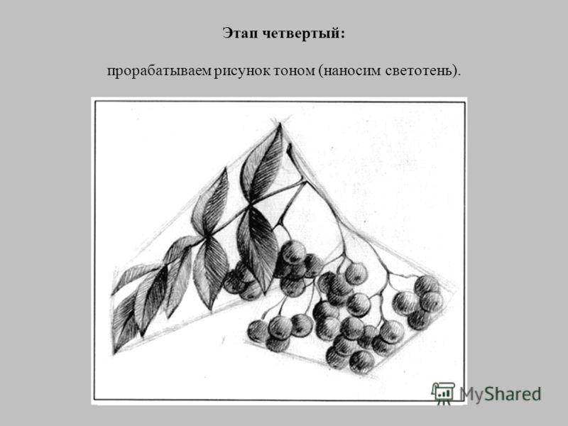 Этап третий: далее следует линейная прорисовка всех контуров: веток, листьев и ягод.