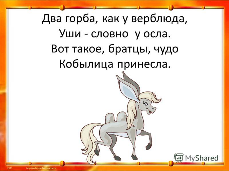 Два горба, как у верблюда, Уши - словно у осла. Вот такое, братцы, чудо Кобылица принесла.