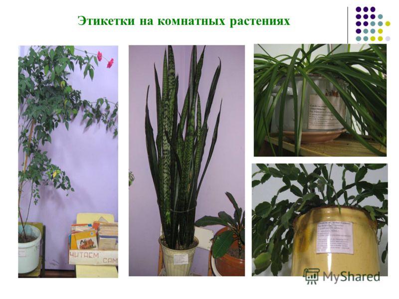 Этикетки на комнатных растениях