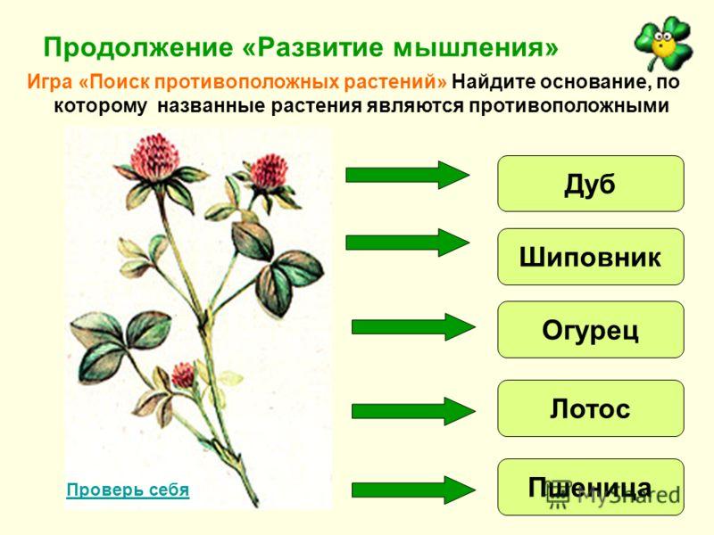 Продолжение «Развитие мышления» Игра «Поиск противоположных растений» Найдите основание, по которому названные растения являются противоположными Дуб Шиповник Огурец Лотос Пшеница Проверь себя