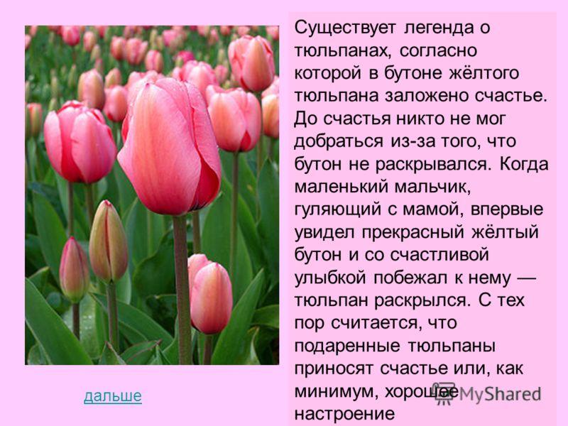 На Руси дикие виды тюльпанов были известны ещё в XII веке, но луковицы сортов садовых тюльпанов впервые были завезены в Россию в эпоху царствования Петра I в 1702 году из Голландии. В России страстными любителями и коллекционерами цветов были князь В