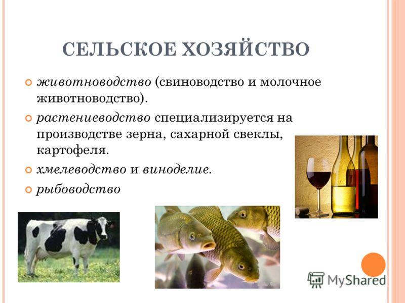 СЕЛЬСКОЕ ХОЗЯЙСТВО животноводство (свиноводство и молочное животноводство). растениеводство специализируется на производстве зерна, сахарной свеклы, картофеля. хмелеводство и виноделие. рыбоводство