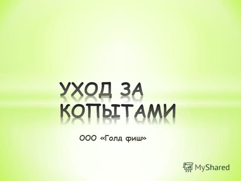 ООО «Голд фиш»