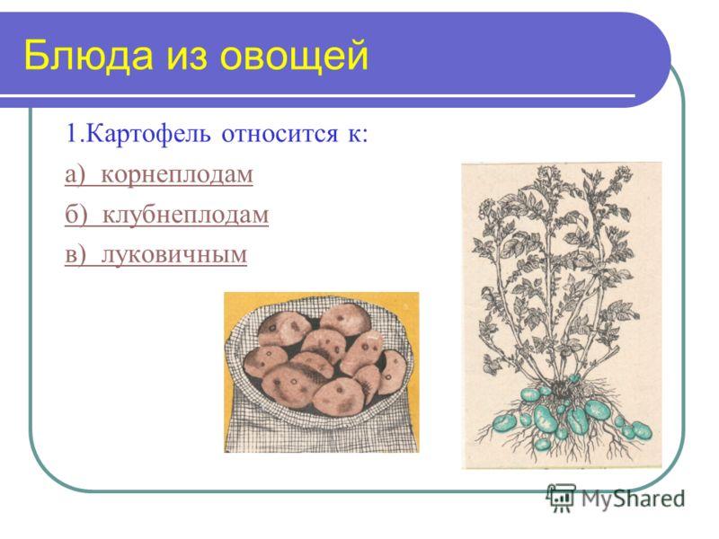 1.Картофель относится к: а) корнеплодам б) клубнеплодам в) луковичным Блюда из овощей