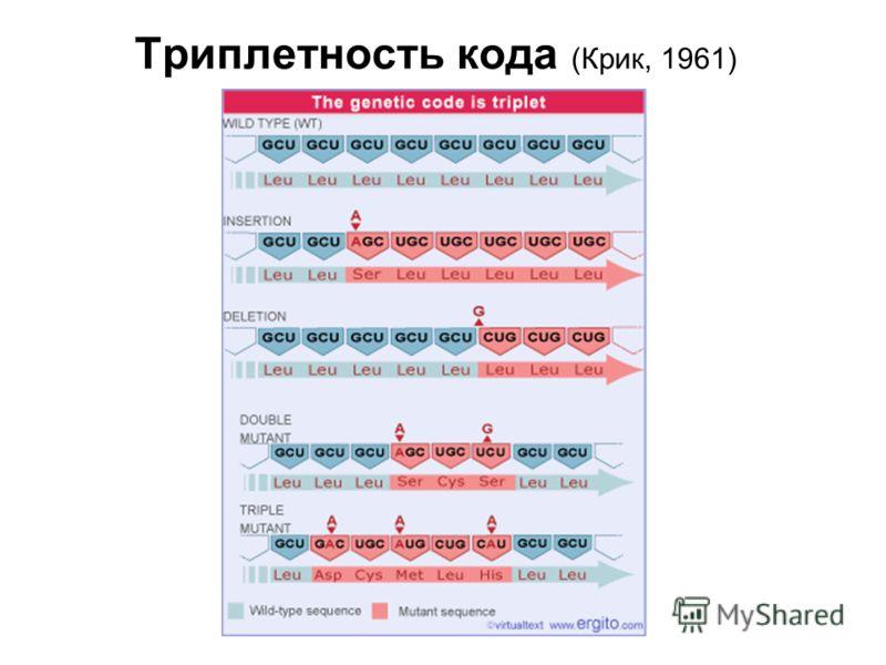 Триплетность кода (Крик, 1961)