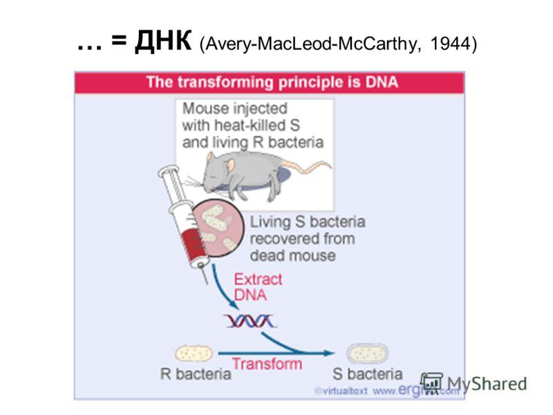 … = ДНК (Avery-MacLeod-McCarthy, 1944)