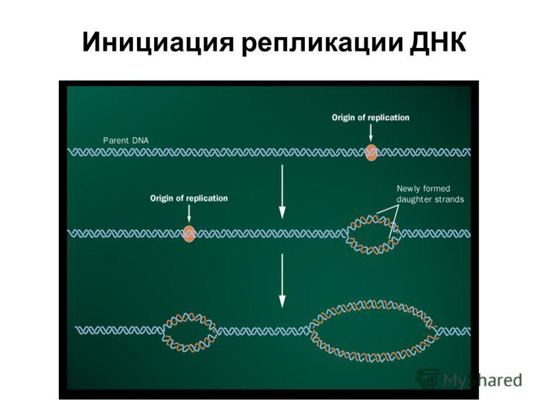 Инициация репликации ДНК