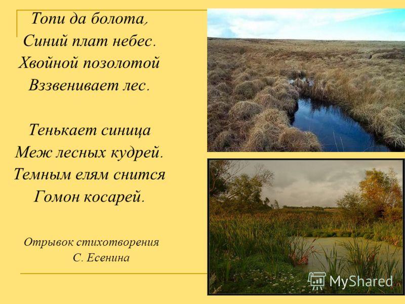 Топи да болота, Синий плат небес. Хвойной позолотой Вззвенивает лес. Тенькает синица Меж лесных кудрей. Темным елям снится Гомон косарей. Отрывок стихотворения С. Есенина