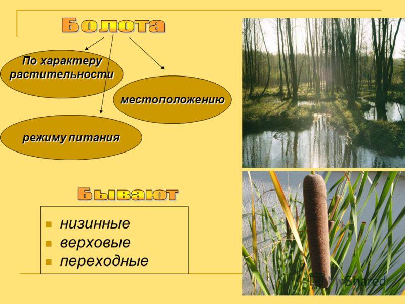 низинные верховые переходные По характеру растительности местоположению режиму питания