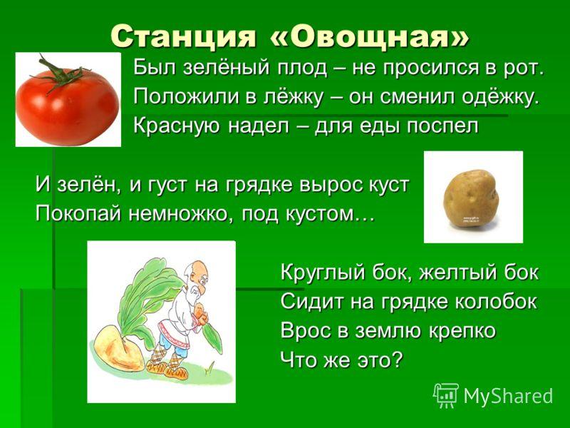 Станция «Овощная» Был зелёный плод – не просился в рот. Был зелёный плод – не просился в рот. Положили в лёжку – он сменил одёжку. Положили в лёжку – он сменил одёжку. Красную надел – для еды поспел Красную надел – для еды поспел И зелён, и густ на г