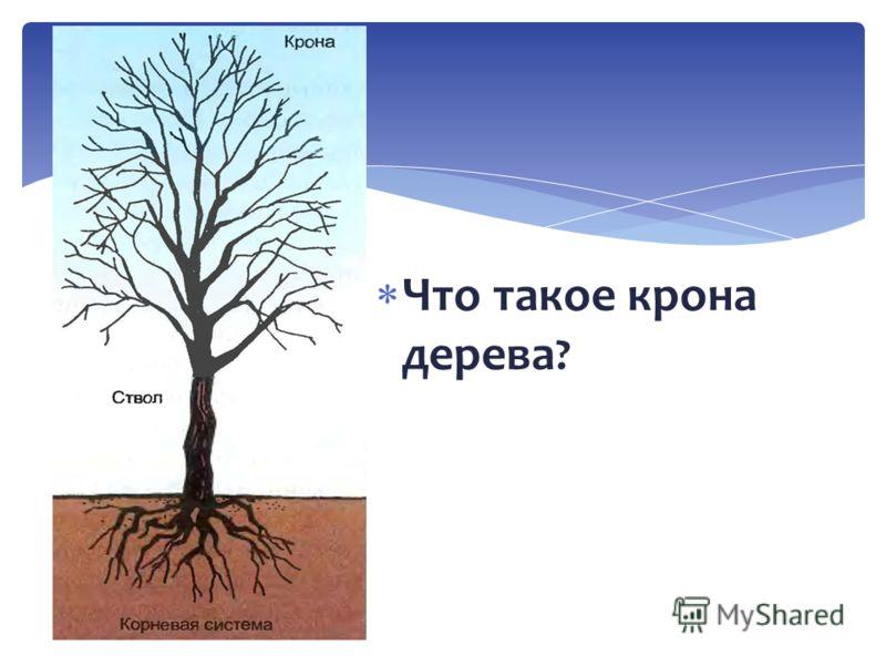 Что такое крона дерева ?