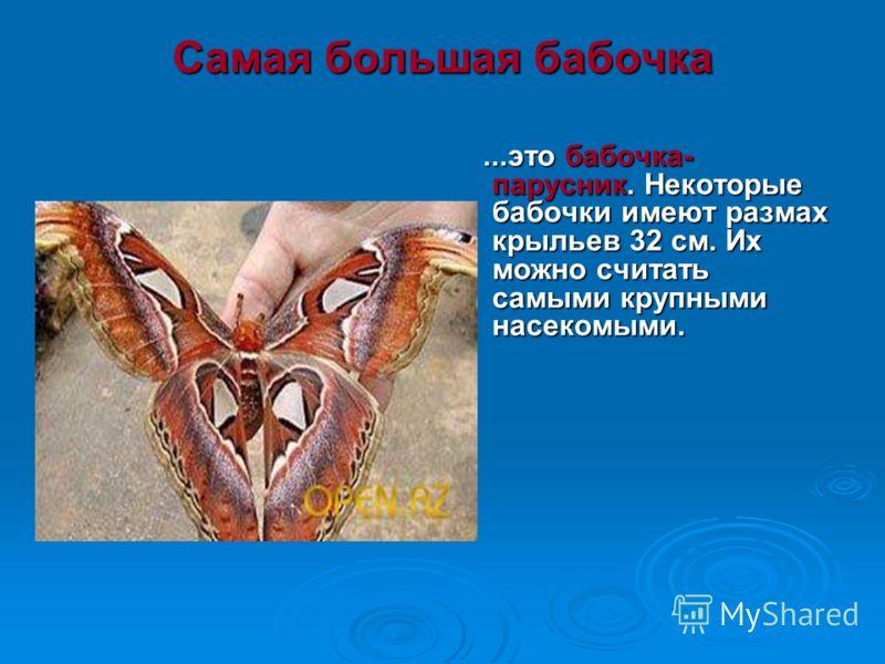 Самая большая бабочка это бабочка