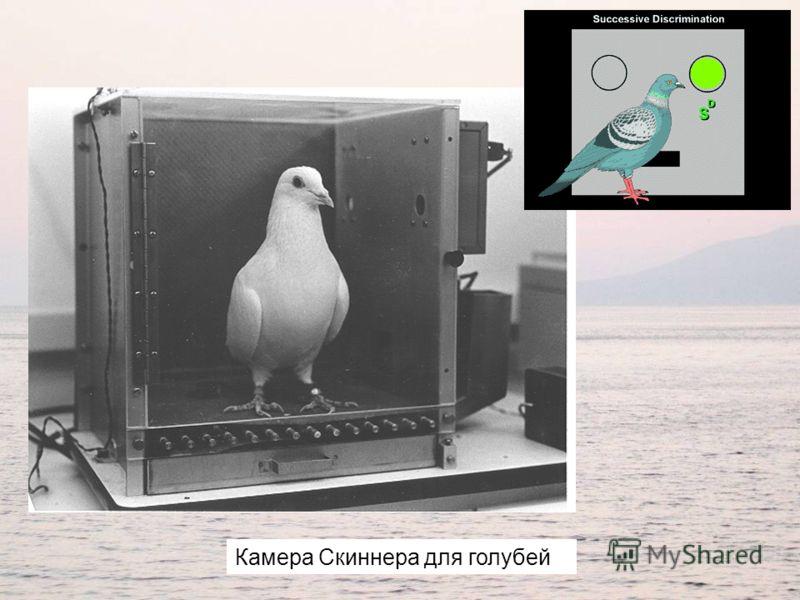 Камера Скиннера для голубей