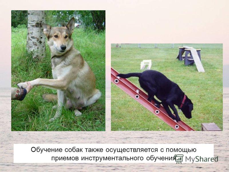 Обучение собак также осуществляется с помощью приемов инструментального обучения