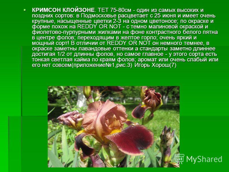 КРИМСОН КЛОЙЗОНЕ. TET 75-80см - один из самых высоких и поздних сортов: в Подмосковье расцветает с 25 июня и имеет очень крупные, насыщенные цветки 2-3 на одном цветоносе; по окраске и форме похож на REDDY OR NOT - с темно малиновой окраской и фиолет