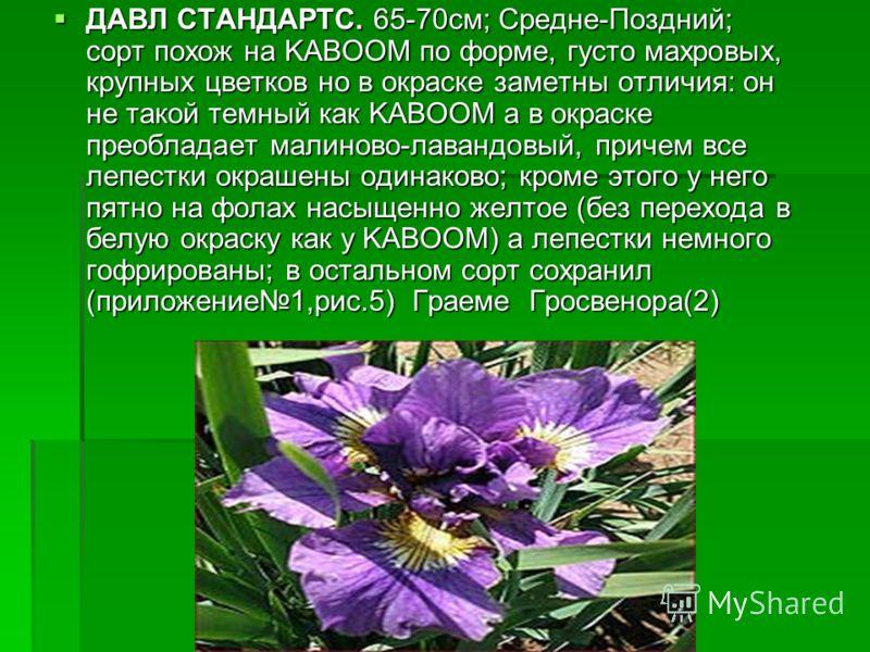 ДАВЛ СТАНДАРТС. 65-70см; Средне-Поздний; сорт похож на KABOOM по форме, густо махровых, крупных цветков но в окраске заметны отличия: он не такой темный как KABOOM а в окраске преобладает малиново-лавандовый, причем все лепестки окрашены одинаково; к