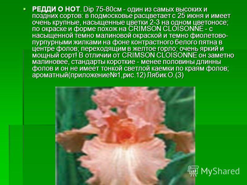РЕДДИ О НОТ. Dip 75-80см - один из самых высоких и поздних сортов: в подмосковье расцветает с 25 июня и имеет очень крупные, насыщенные цветки 2-3 на одном цветоносе; по окраске и форме похож на CRIMSON CLOISONNE - с насыщенной темно малиновой окраск