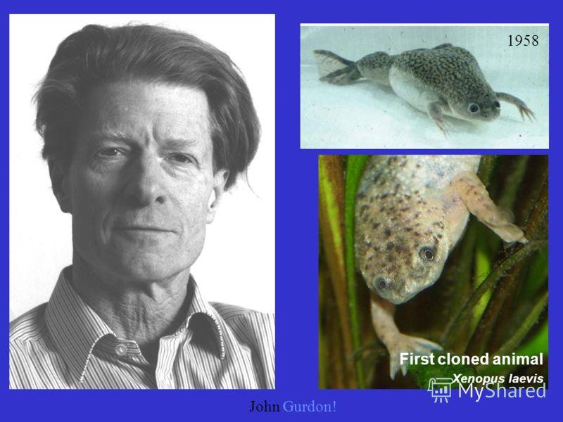 John Gurdon! 1958 First cloned animal Xenopus laevis