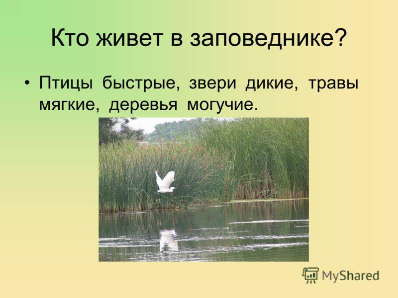 Кто живет в заповеднике? Птицы быстрые, звери дикие, травы мягкие, деревья могучие.