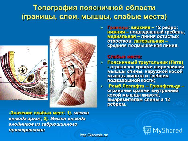 Нефротомия фото