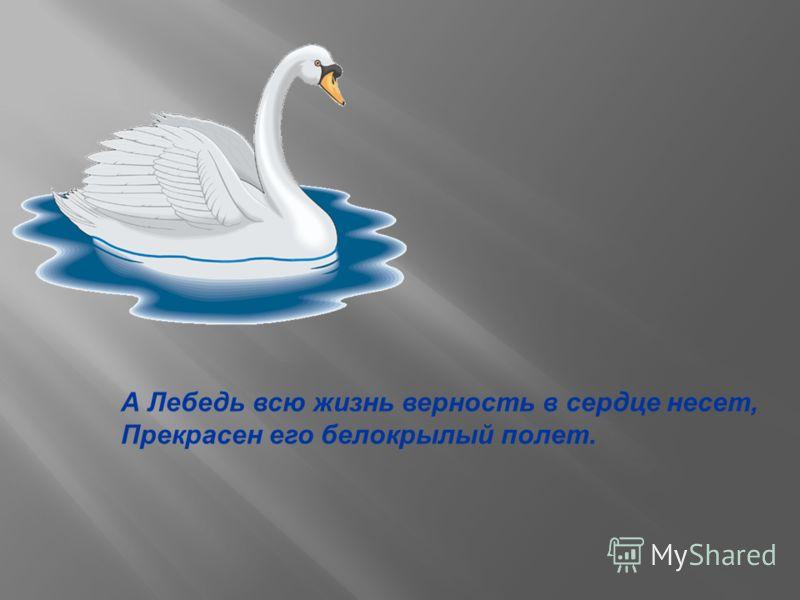 А Лебедь всю жизнь верность в сердце несет, Прекрасен его белокрылый полет.