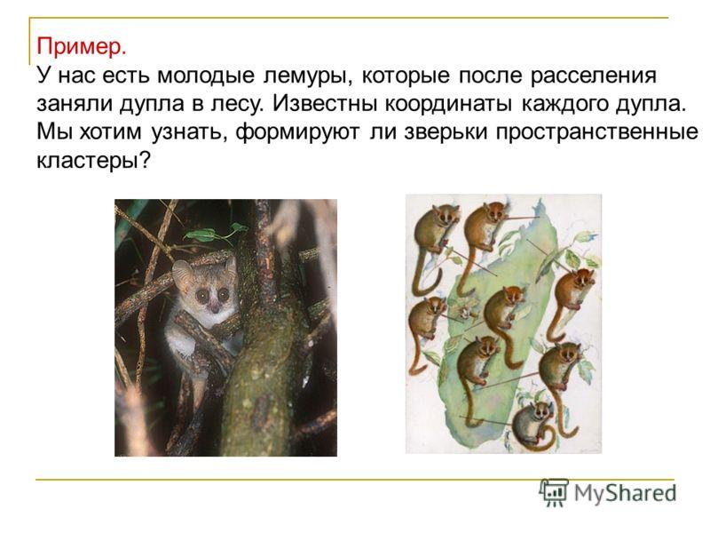 Пример. У нас есть молодые лемуры, которые после расселения заняли дупла в лесу. Известны координаты каждого дупла. Мы хотим узнать, формируют ли зверьки пространственные кластеры?