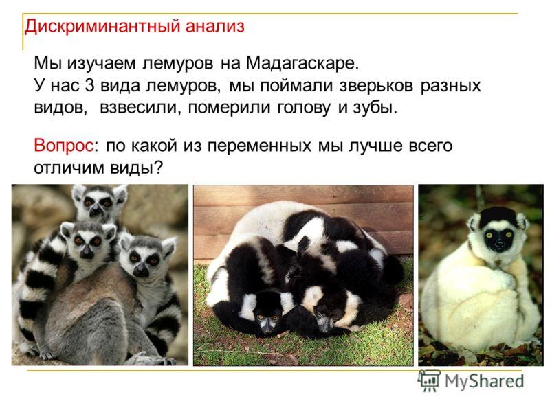 Мы изучаем лемуров на Мадагаскаре. У нас 3 вида лемуров, мы поймали зверьков разных видов, взвесили, померили голову и зубы. Вопрос: по какой из переменных мы лучше всего отличим виды? Дискриминантный анализ