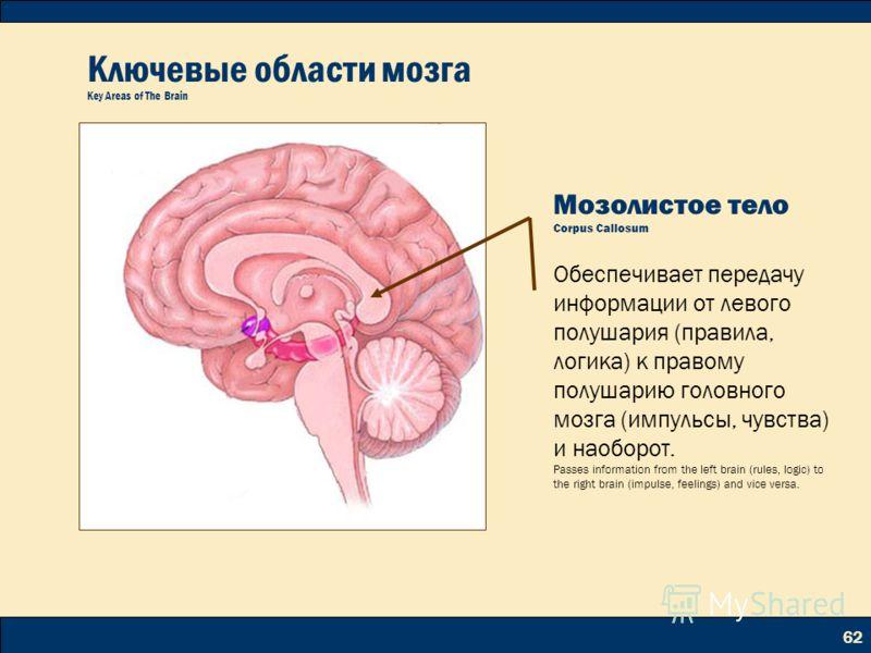 62 Ключевые области мозга Key Areas of The Brain Мозолистое тело Corpus Callosum Обеспечивает передачу информации от левого полушария (правила, логика) к правому полушарию головного мозга (импульсы, чувства) и наоборот. Passes information from the le