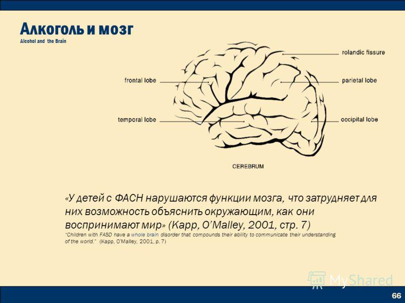 66 Алкоголь и мозг Alcohol and the Brain «У детей с ФАСН нарушаются функции мозга, что затрудняет для них возможность объяснить окружающим, как они воспринимают мир» (Kapp, OMalley, 2001, стр. 7) Children with FASD have a whole brain disorder that co