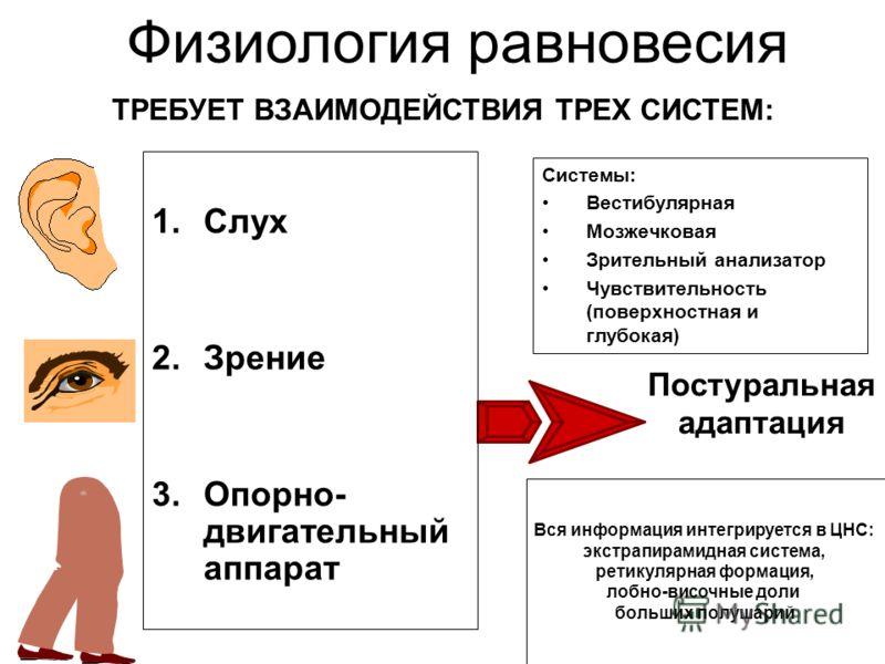 Постуральная адаптация Физиология равновесия 1.Слух 2.Зрение 3.Опорно- двигательный аппарат ТРЕБУЕТ ВЗАИМОДЕЙСТВИЯ ТРЕХ СИСТЕМ: Системы: Вестибулярная Мозжечковая Зрительный анализатор Чувствительность (поверхностная и глубокая) Вся информация интегр