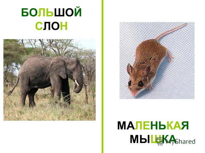 БОЛЬШОЙ СЛОН МАЛЕНЬКАЯ МЫШКА