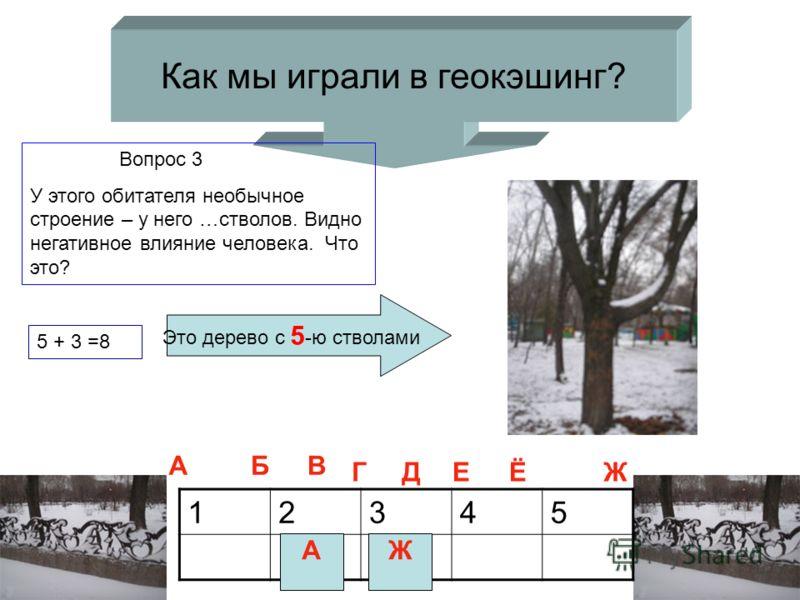 Как мы играли в геокэшинг? Вопрос 3 У этого обитателя необычное строение – у него …стволов. Видно негативное влияние человека. Что это? 12345 А Это дерево с 5 -ю стволами 5 + 3 =8 АБВ ГДЕЁЖ Ж
