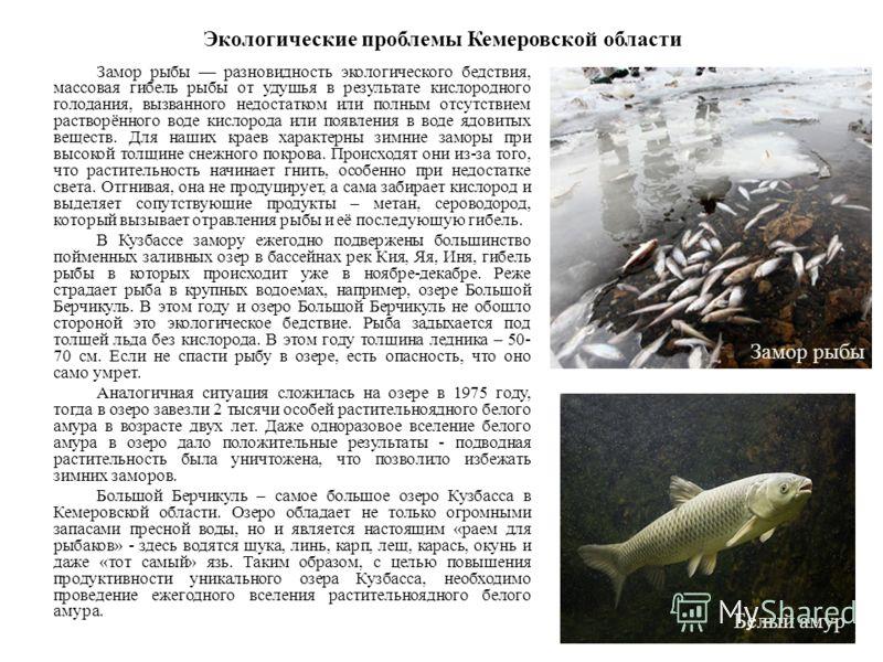 Экологические проблемы Кемеровской области Замор рыбы разновидность экологического бедствия, массовая гибель рыбы от удушья в результате кислородного голодания, вызванного недостатком или полным отсутствием растворённого воде кислорода или появления