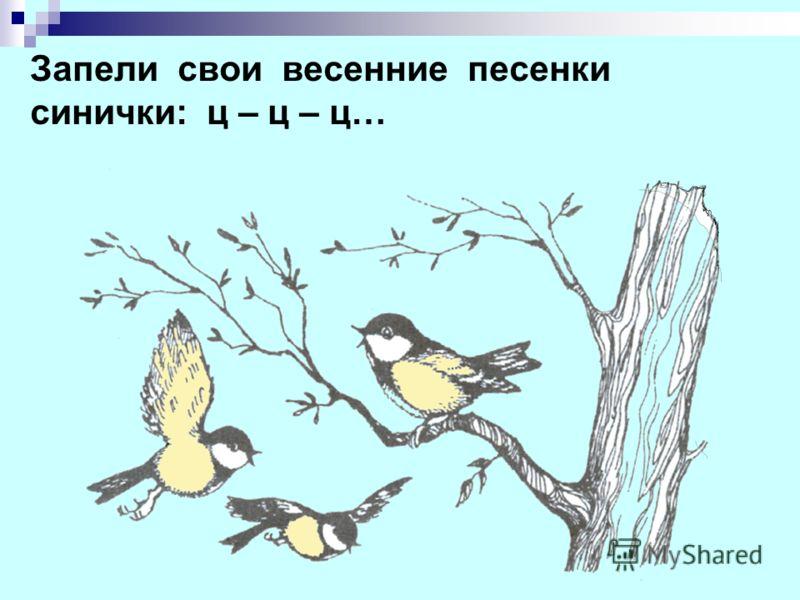 Запели свои весенние песенки синички: ц – ц – ц…
