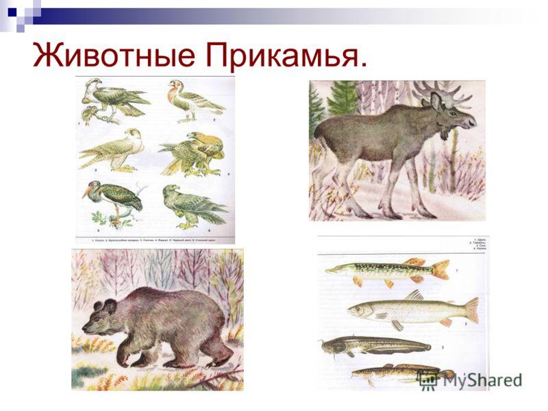 Животные Прикамья.