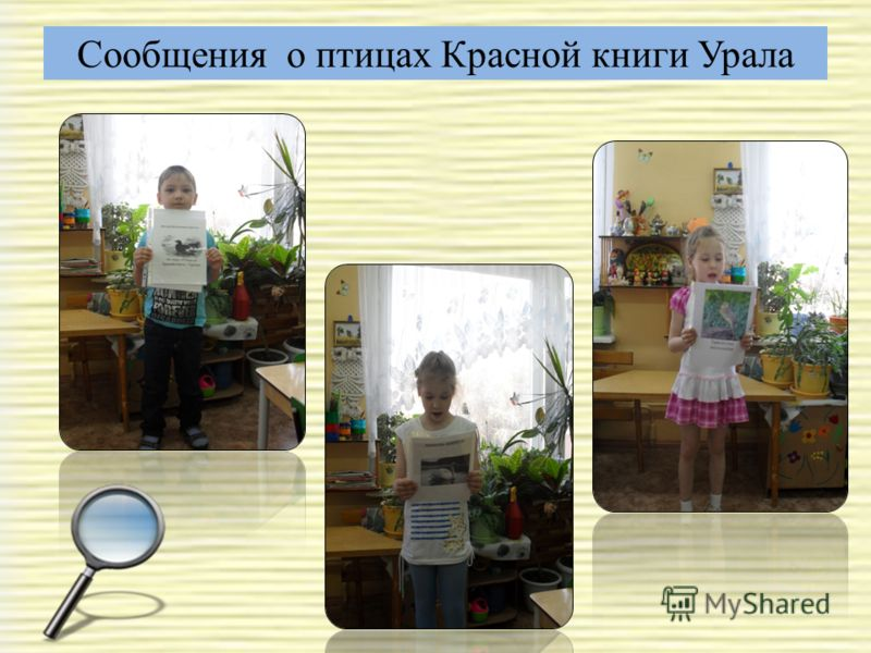 Сообщения о птицах Красной книги Урала