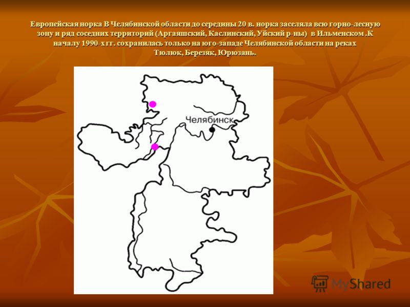 Европейская норка В Челябинской области до середины 20 в. норка заселяла всю горно-лесную зону и ряд соседних территорий (Аргаяшский, Каслинский, Уйский р-ны) в Ильменском.К началу 1990-х гг. сохранилась только на юго-западе Челябинской области на ре