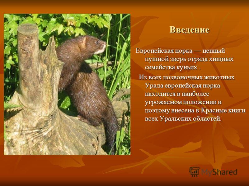 Животные красной книги кузбасса реферат 2891