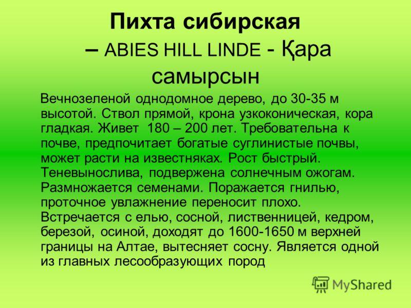 Пихта сибирская – ABIES HILL LINDE - Қара самырсын Вечнозеленой однодомное дерево, до 30-35 м высотой. Ствол прямой, крона узкоконическая, кора гладкая. Живет 180 – 200 лет. Требовательна к почве, предпочитает богатые суглинистые почвы, может расти н