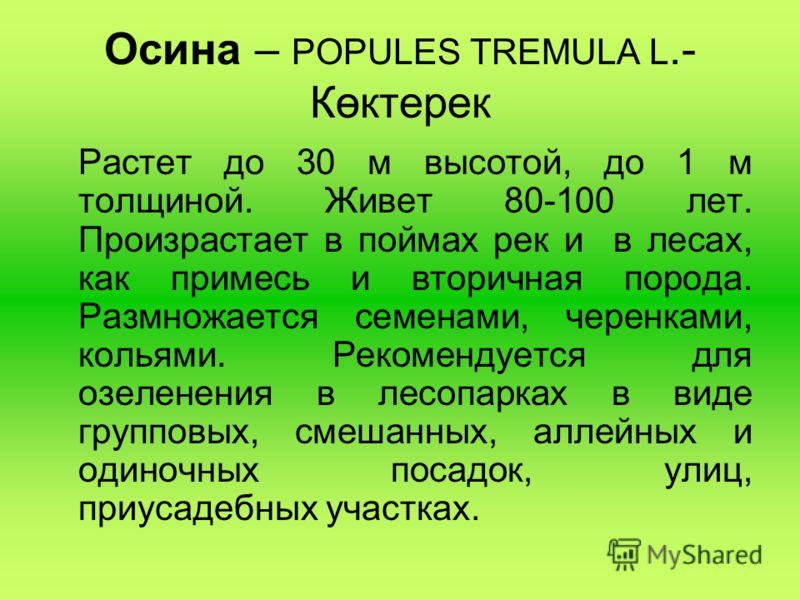Осина – POPULES TREMULA L.- Көктерек Растет до 30 м высотой, до 1 м толщиной. Живет 80-100 лет. Произрастает в поймах рек и в лесах, как примесь и вторичная порода. Размножается семенами, черенками, кольями. Рекомендуется для озеленения в лесопарках