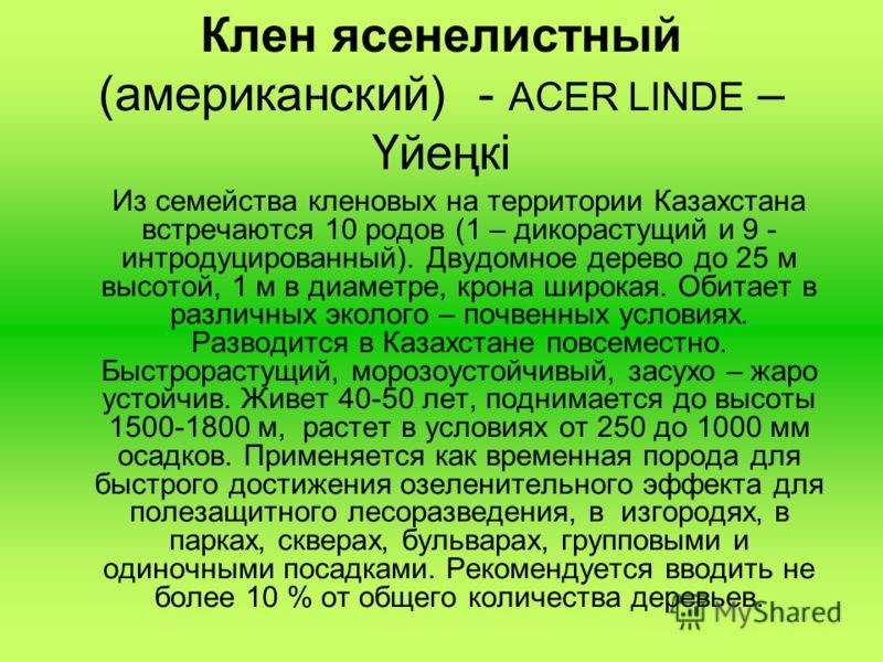 Клен ясенелистный (американский) - ACER LINDE – Үйеңкі Из семейства кленовых на территории Казахстана встречаются 10 родов (1 – дикорастущий и 9 - интродуцированный). Двудомное дерево до 25 м высотой, 1 м в диаметре, крона широкая. Обитает в различны