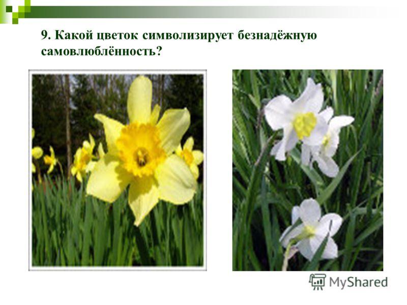 9. Какой цветок символизирует безнадёжную самовлюблённость?