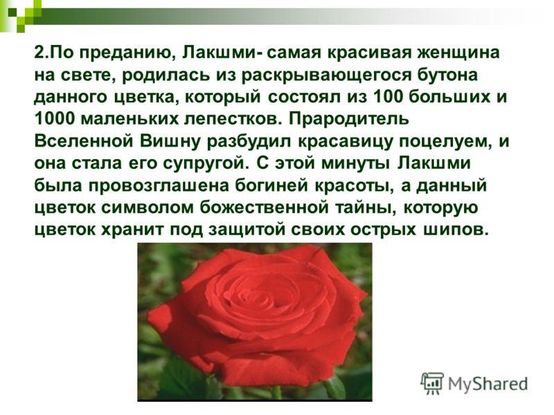 2.По преданию, Лакшми- самая красивая женщина на свете, родилась из раскрывающегося бутона данного цветка, который состоял из 100 больших и 1000 маленьких лепестков. Прародитель Вселенной Вишну разбудил красавицу поцелуем, и она стала его супругой. С