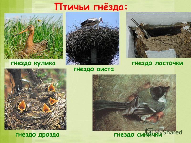 Птичьи гнёзда: гнездо куликагнездо ласточки гнездо дроздагнездо синички гнездо аиста
