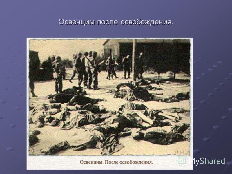 Освенцим после освобождения.