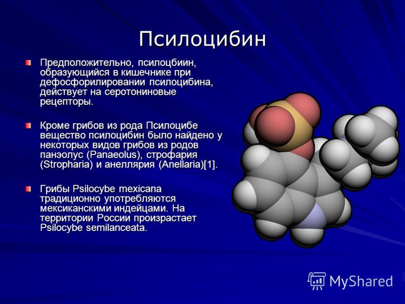 Псилоцибин Предположительно, псилоцбиин, образующийся в кишечнике при дефосфорилировании псилоцибина, действует на серотониновые рецепторы. Кроме грибов из рода Псилоцибе вещество псилоцибин было найдено у некоторых видов грибов из родов панэолус (Pa