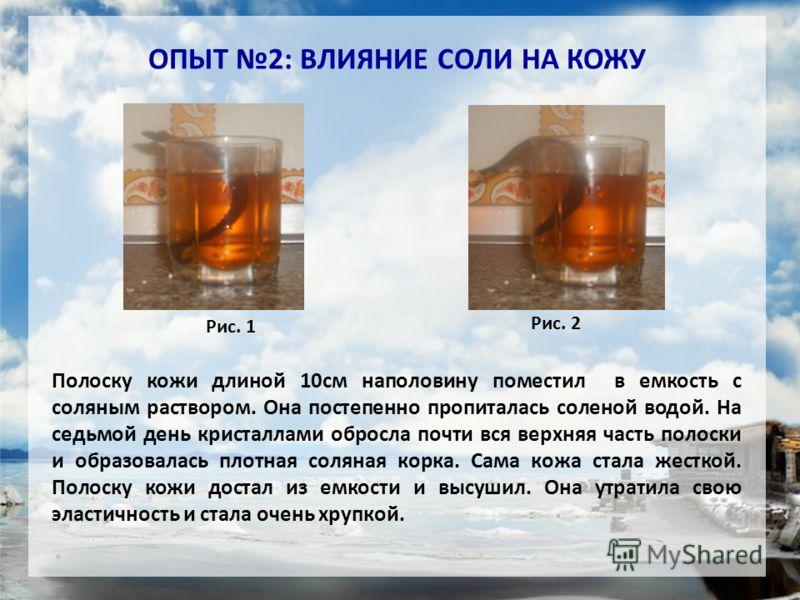 ОПЫТ 2: ВЛИЯНИЕ СОЛИ НА КОЖУ Рис. 1 Рис. 2 Полоску кожи длиной 10см наполовину поместил в емкость с соляным раствором. Она постепенно пропиталась соленой водой. На седьмой день кристаллами обросла почти вся верхняя часть полоски и образовалась плотна